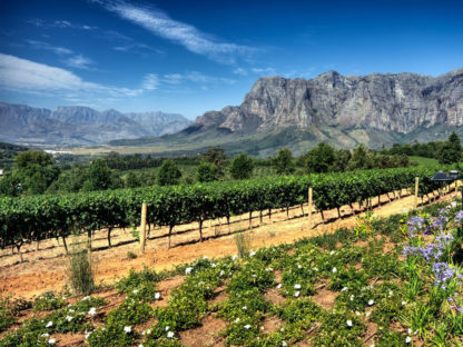 Cape-Town-Winelands-Day-Trips-Global-Travel-Alliance-SA